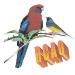 Bourse aux Oiseaux, Foire à la Volaille et Vide Greniers – Dimanche 23 Octobre 2016